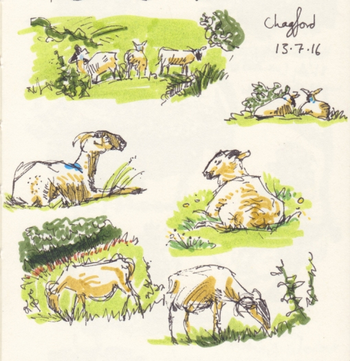 Page13Detail-Sheep