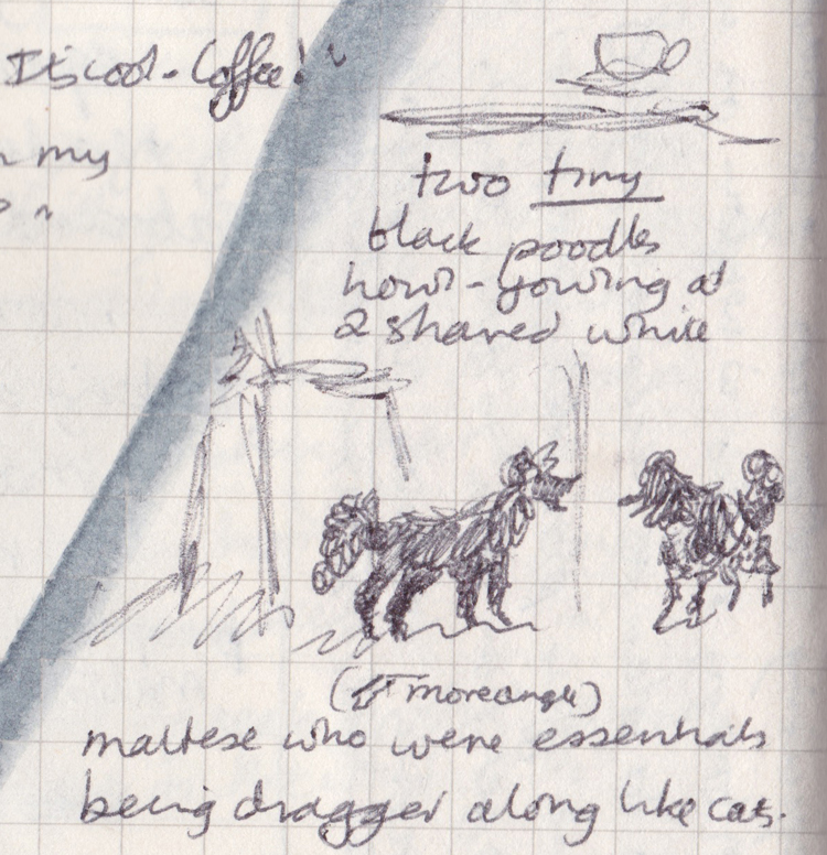 """Drawing of two black teacup poodles, with writing: """"Two tiny black poodles howl-yowling at 2 shaved white maltese who were essentially being dragged along like cats"""""""
