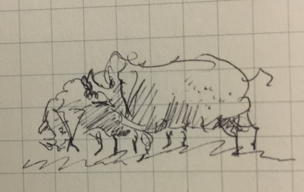 Tiny pen sketch of two large and ugly pigs