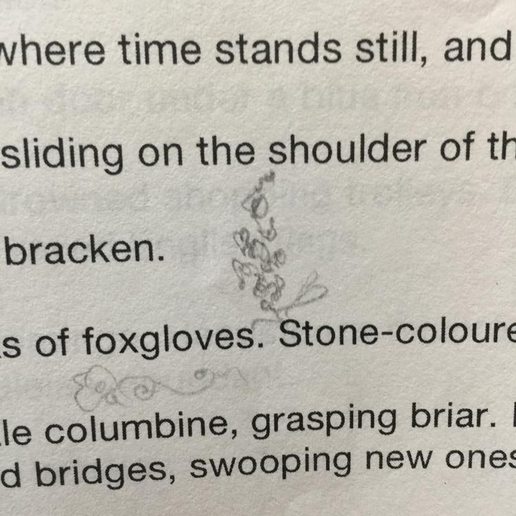 Pencil sketch of foxgloves, over cut-off text.