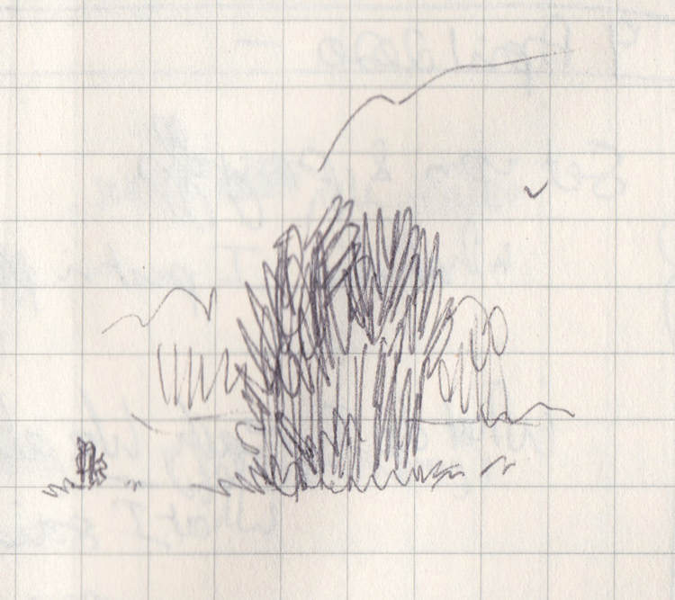 Tiny pen drawing of a little stand of trees