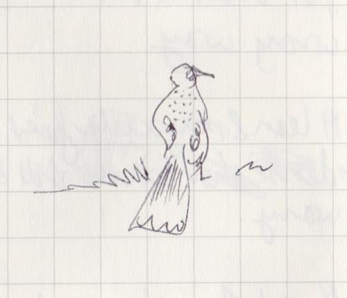 Pen sketch of a honeyeater