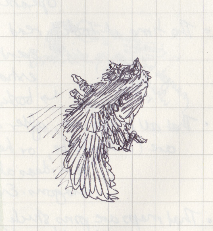 Ballpoint drawing of a cat rolling on its back.